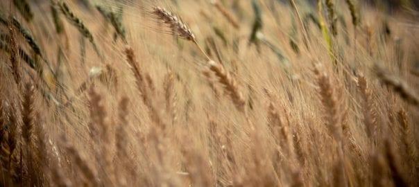 Oportunidades de Inversión en el Sector Agrícola Ruso